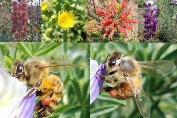 Biodiversidad, el equilibrio en la Tierra*
